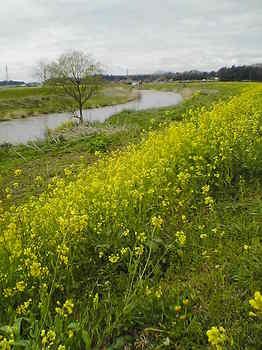 姿川堤SA351162-1.jpg